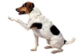 Go Sit Dog Training Cost