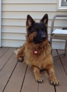 New Jersey Dog Training Programs